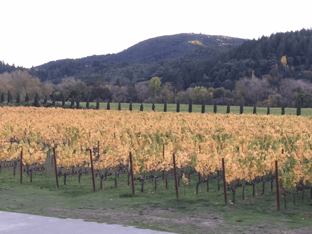 Vineyards in Geyserville, Ca