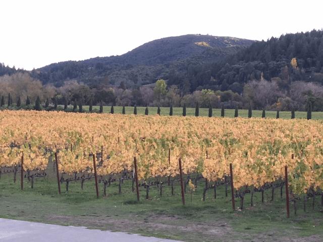 Vineyards in Geyserville, Ca